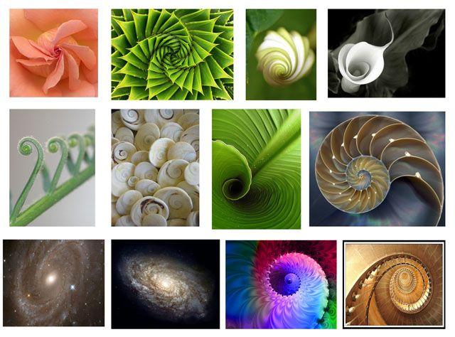 espirales en la naturaleza