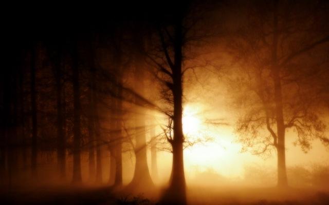 Luz en la oscuridad-373245